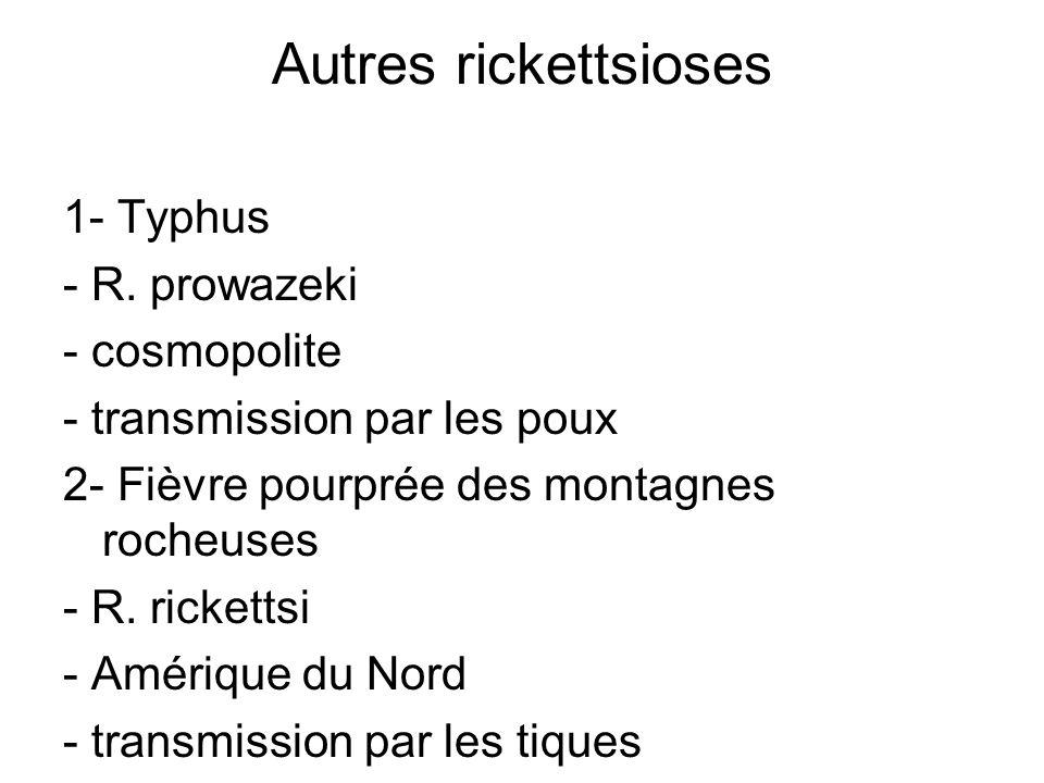 Autres rickettsioses 1- Typhus - R. prowazeki - cosmopolite