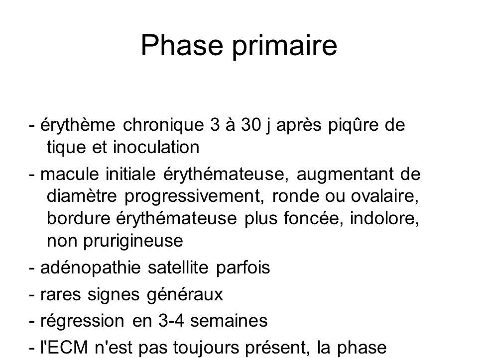 Phase primaire - érythème chronique 3 à 30 j après piqûre de tique et inoculation.