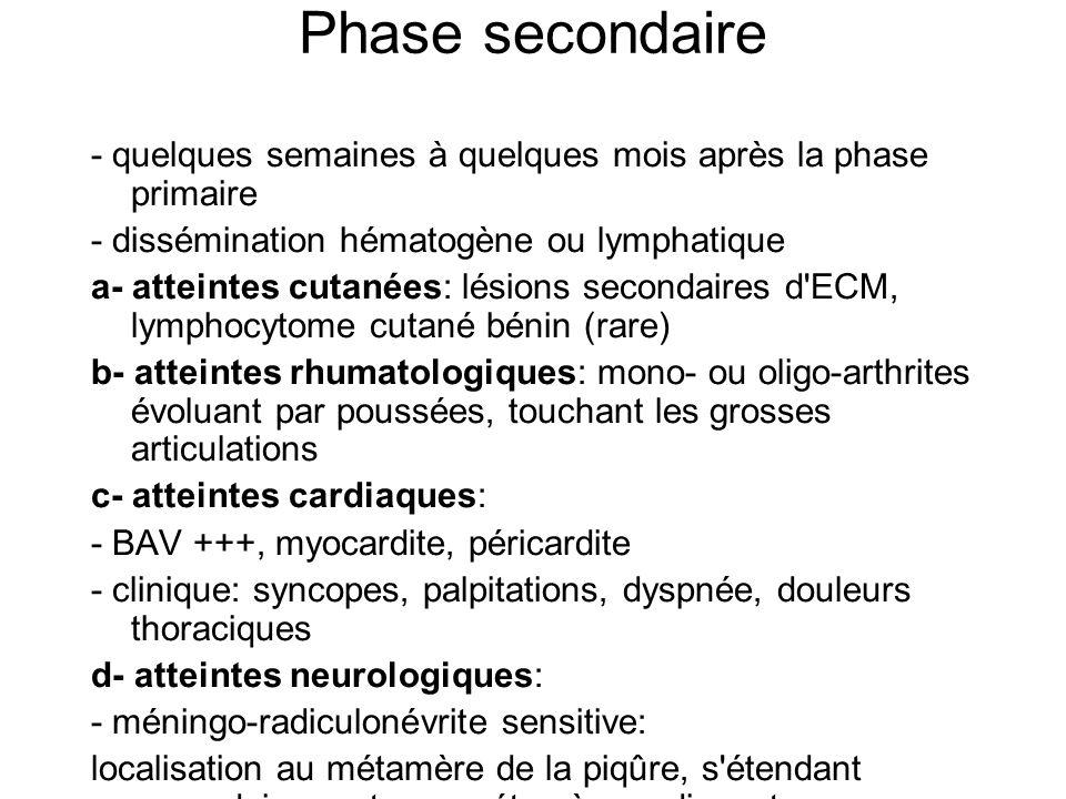 Phase secondaire - quelques semaines à quelques mois après la phase primaire. - dissémination hématogène ou lymphatique.