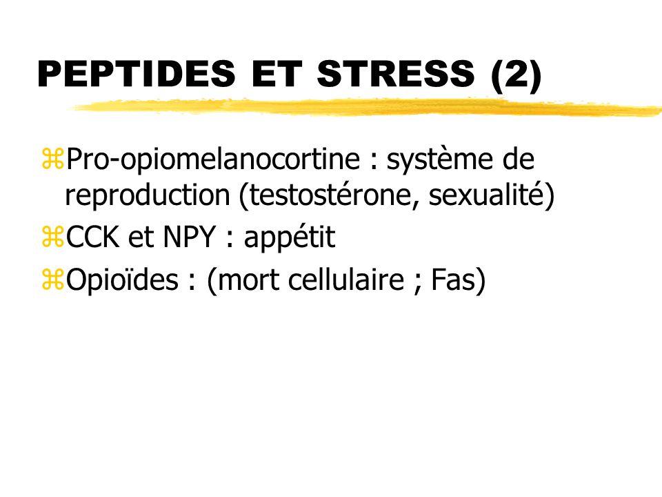 PEPTIDES ET STRESS (2) Pro-opiomelanocortine : système de reproduction (testostérone, sexualité) CCK et NPY : appétit.