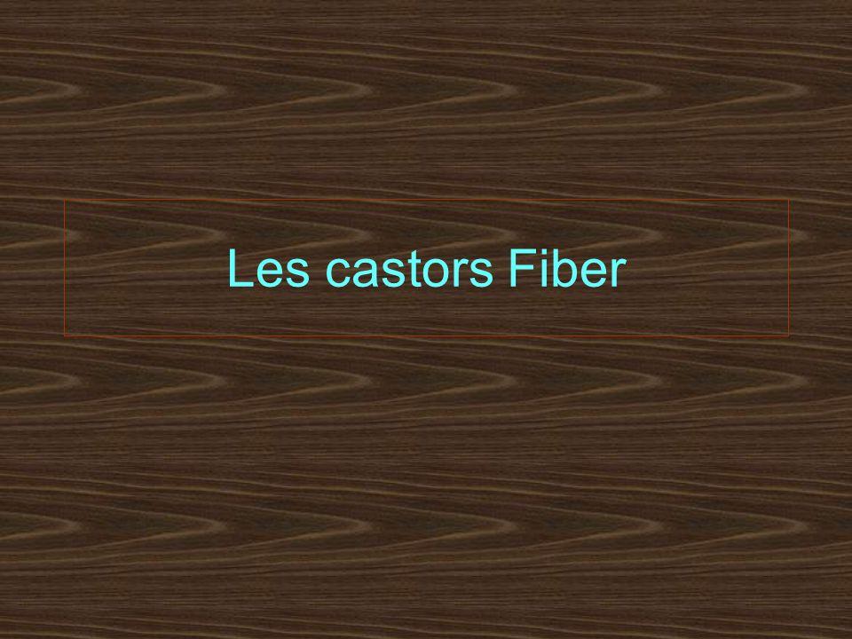 Les castors Fiber