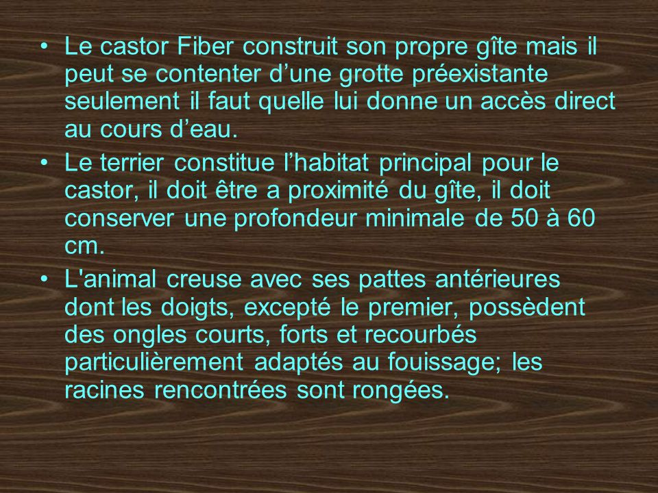 les castors fiber ppt video online t l charger. Black Bedroom Furniture Sets. Home Design Ideas