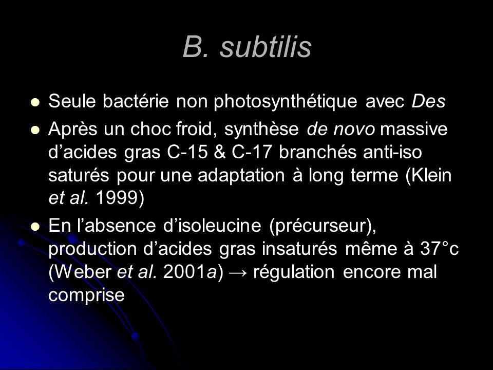 B. subtilis Seule bactérie non photosynthétique avec Des
