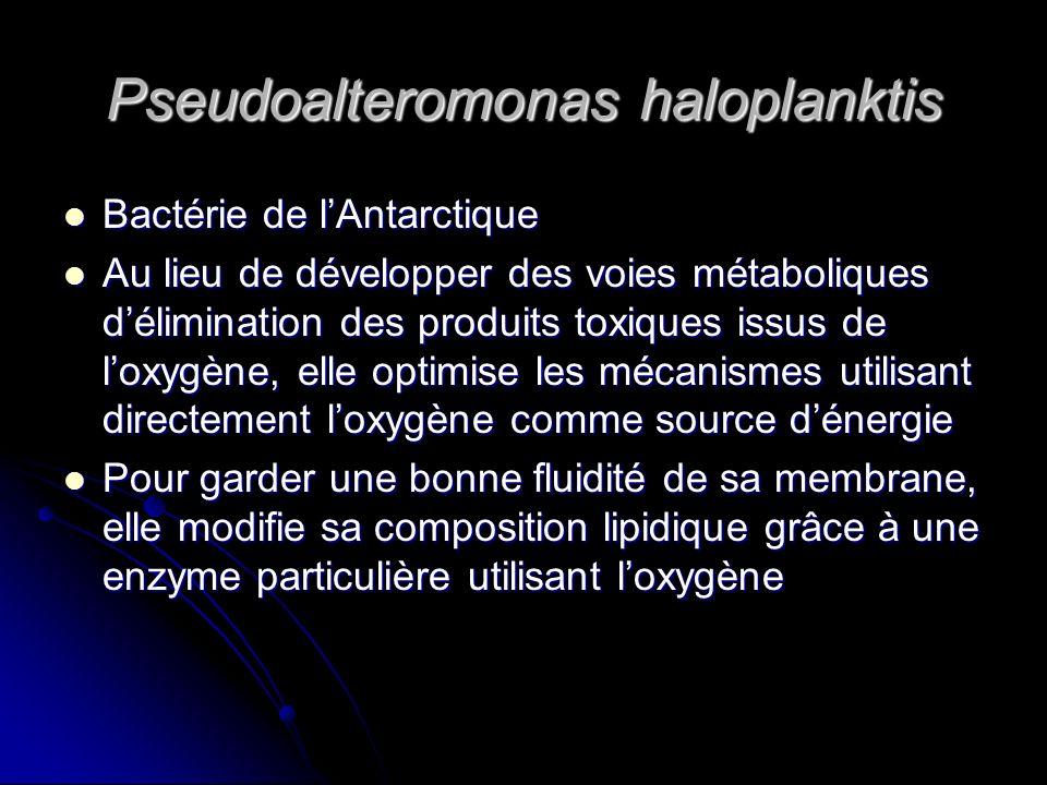 Pseudoalteromonas haloplanktis