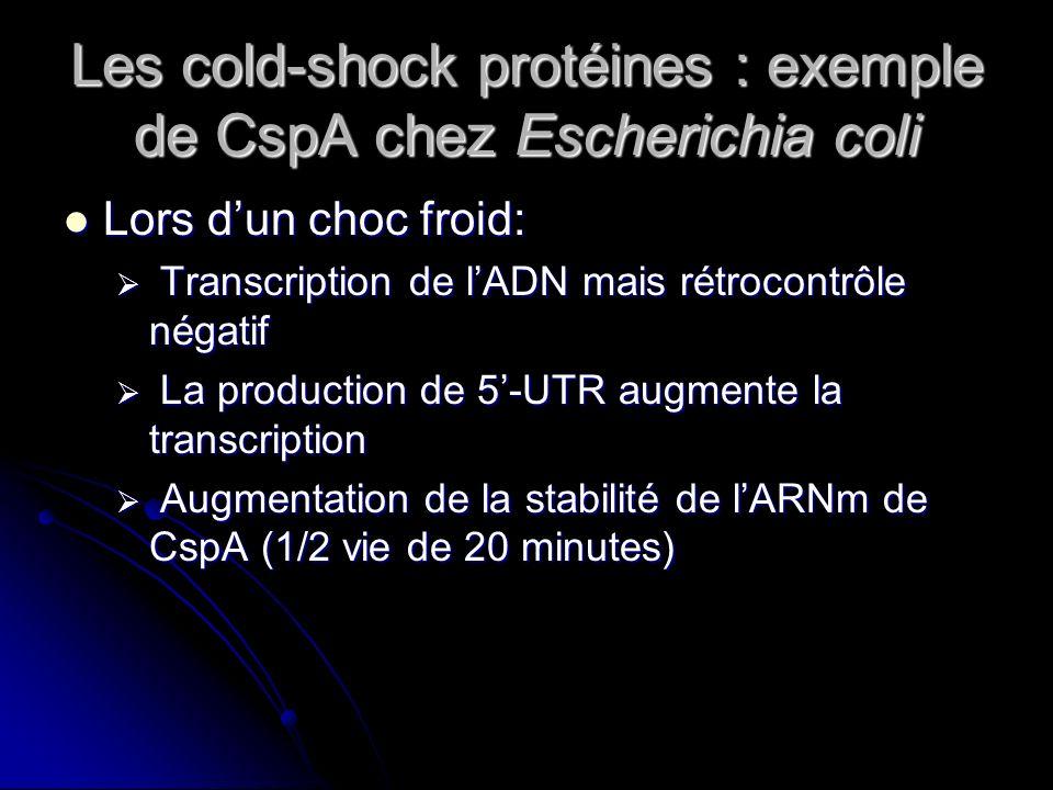 Les cold-shock protéines : exemple de CspA chez Escherichia coli