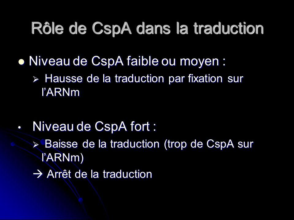 Rôle de CspA dans la traduction