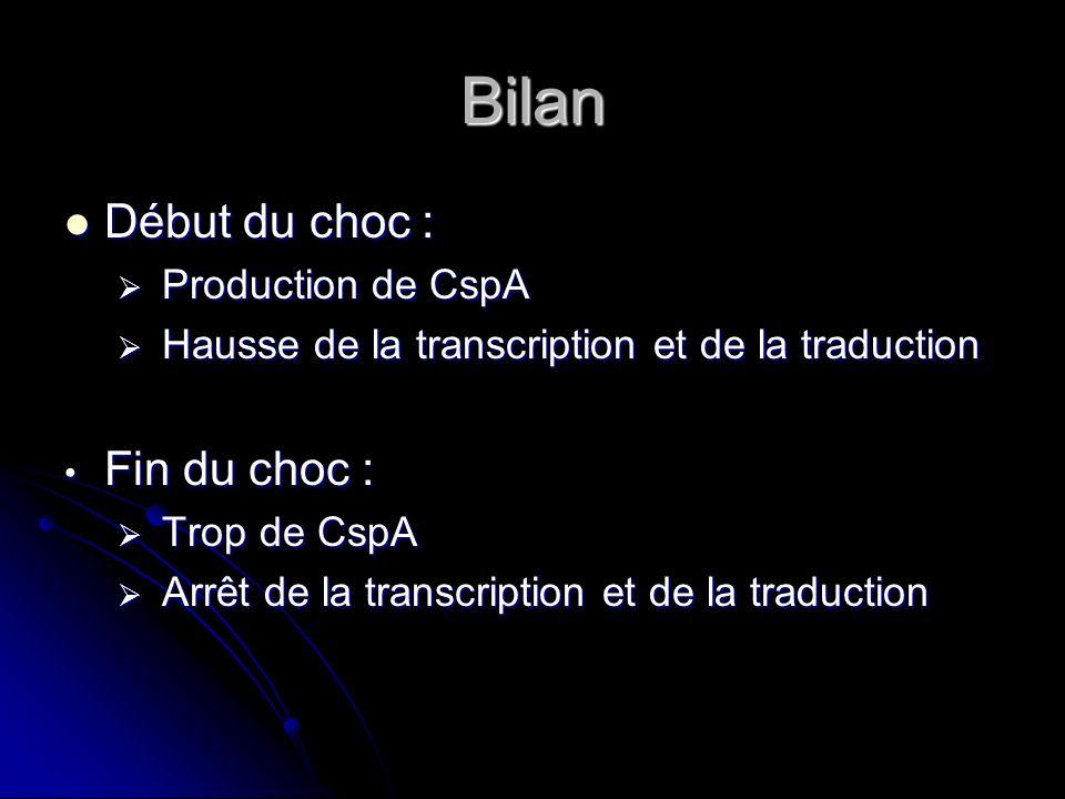 Bilan Début du choc : Fin du choc : Production de CspA