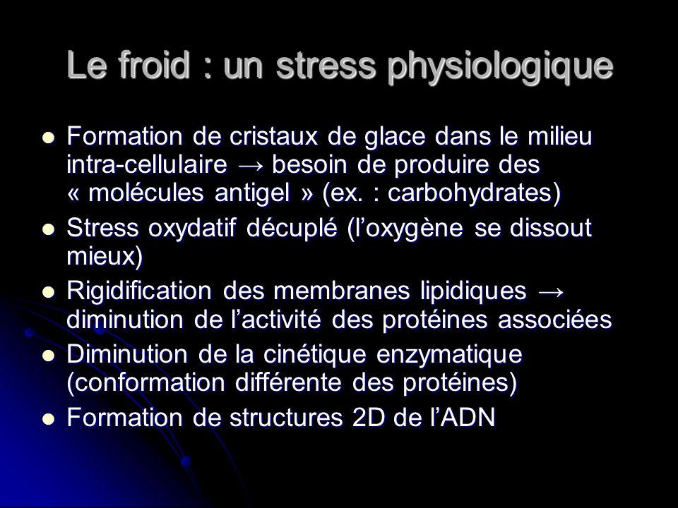 Le froid : un stress physiologique