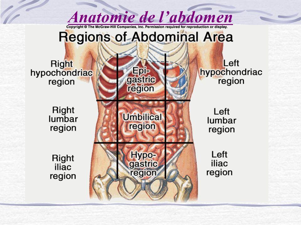 Anatomie de l'abdomen