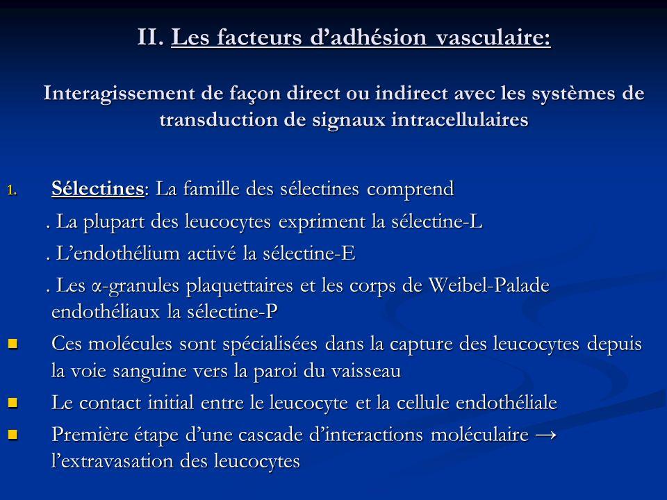 II. Les facteurs d'adhésion vasculaire: Interagissement de façon direct ou indirect avec les systèmes de transduction de signaux intracellulaires