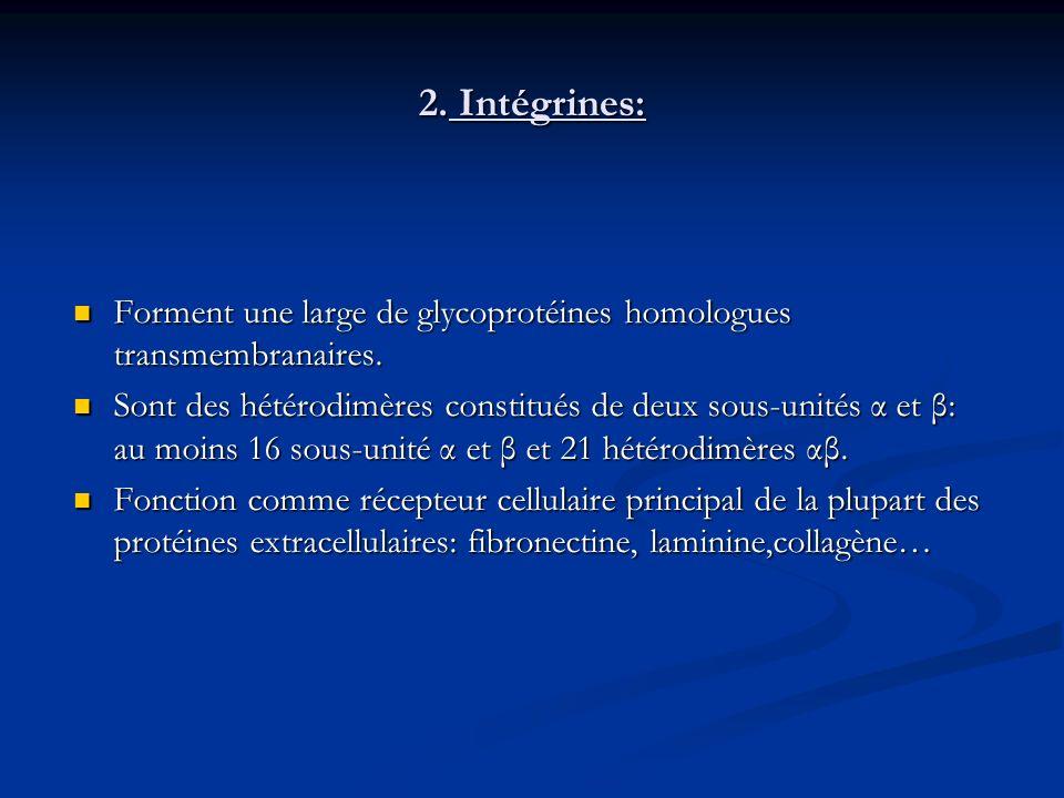 2. Intégrines: Forment une large de glycoprotéines homologues transmembranaires.