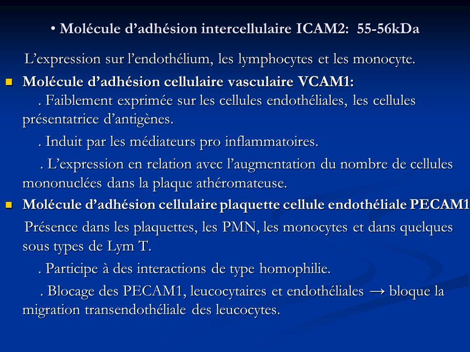 Molécule d'adhésion intercellulaire ICAM2: 55-56kDa