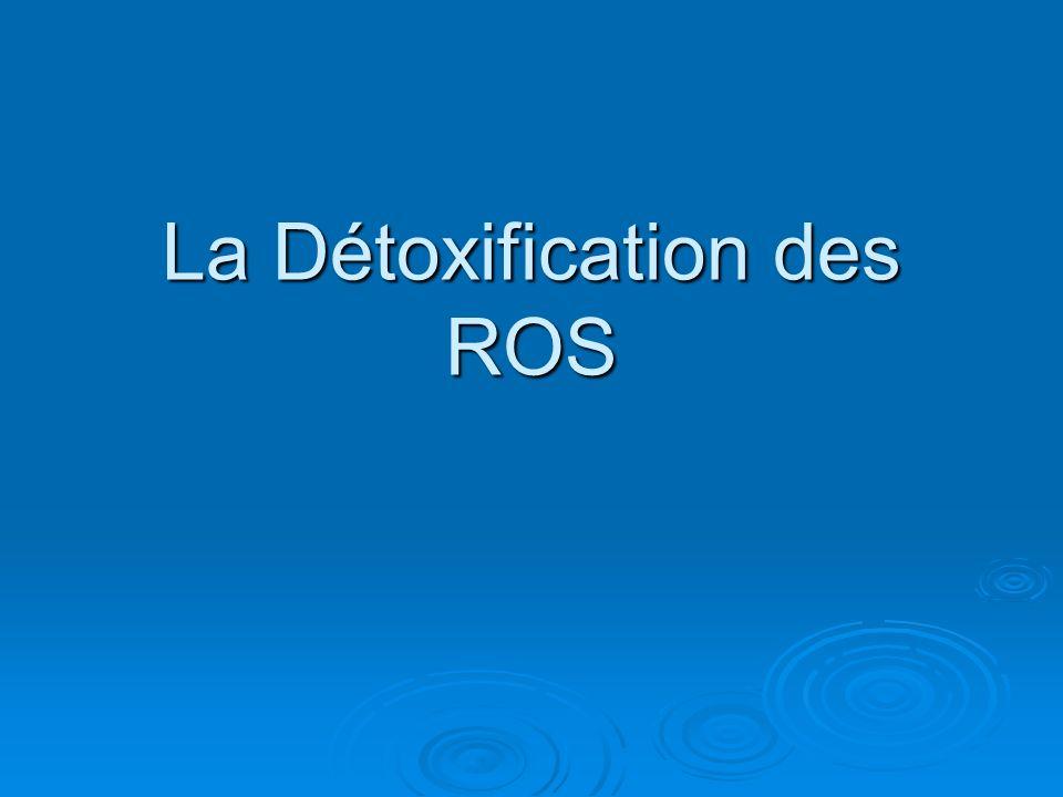 La Détoxification des ROS