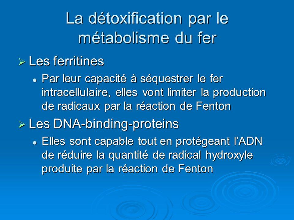 La détoxification par le métabolisme du fer
