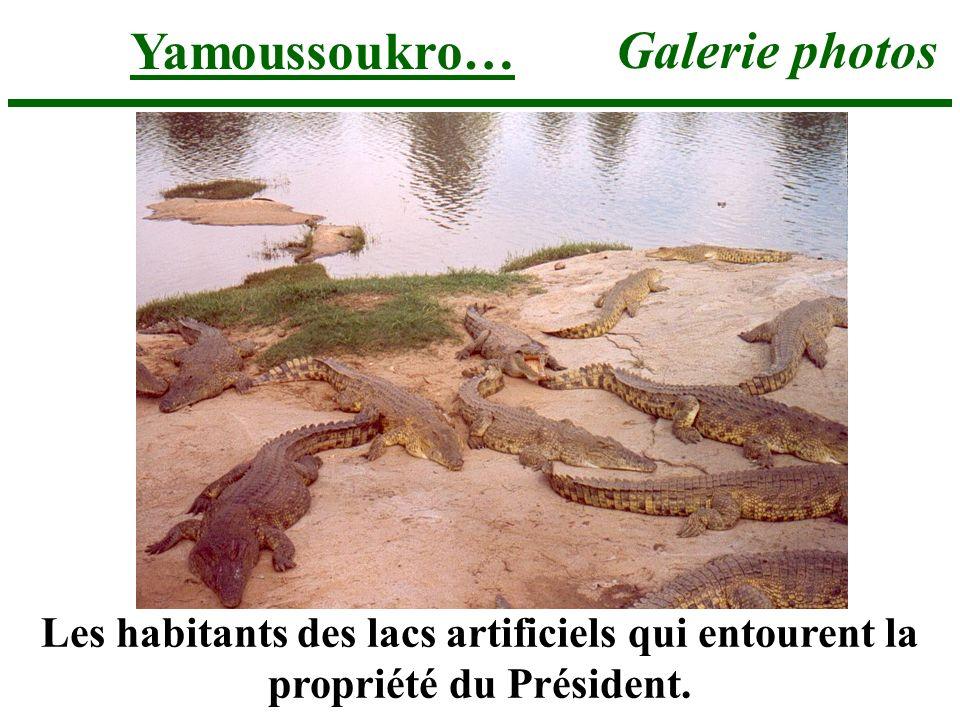 Yamoussoukro… Galerie photos