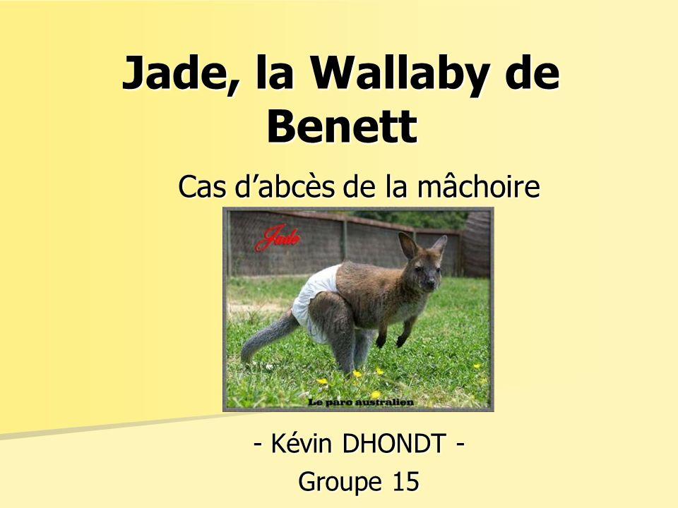 Jade, la Wallaby de Benett