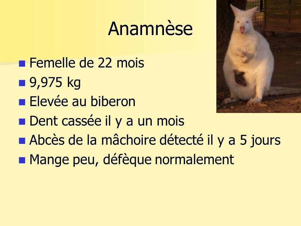 Anamnèse Femelle de 22 mois 9,975 kg Elevée au biberon