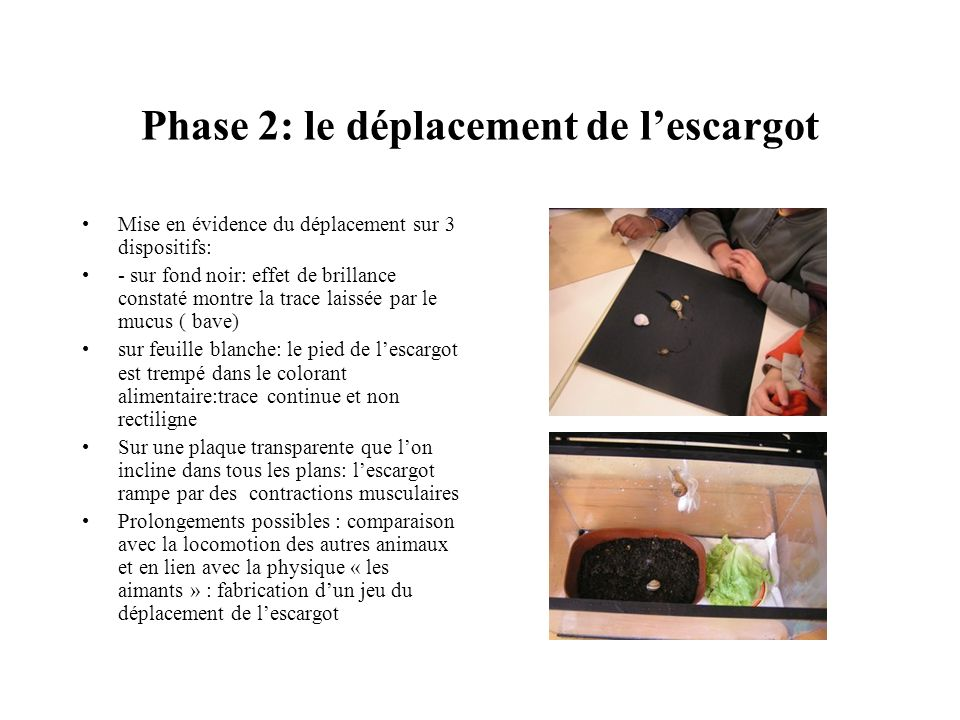 Phase 2: le déplacement de l'escargot