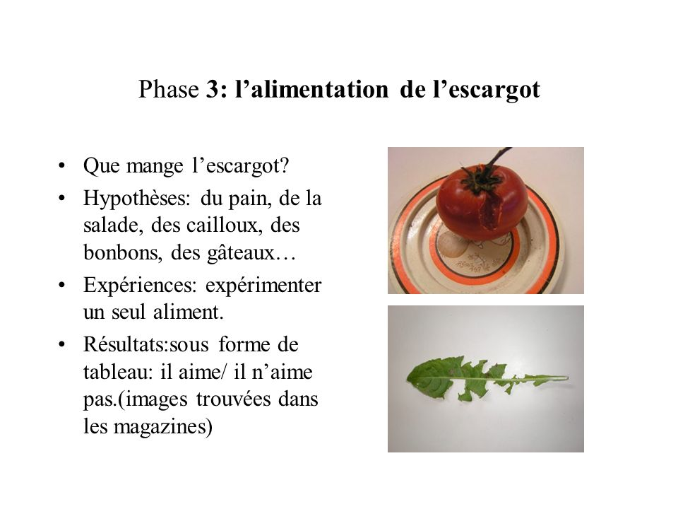 Phase 3: l'alimentation de l'escargot