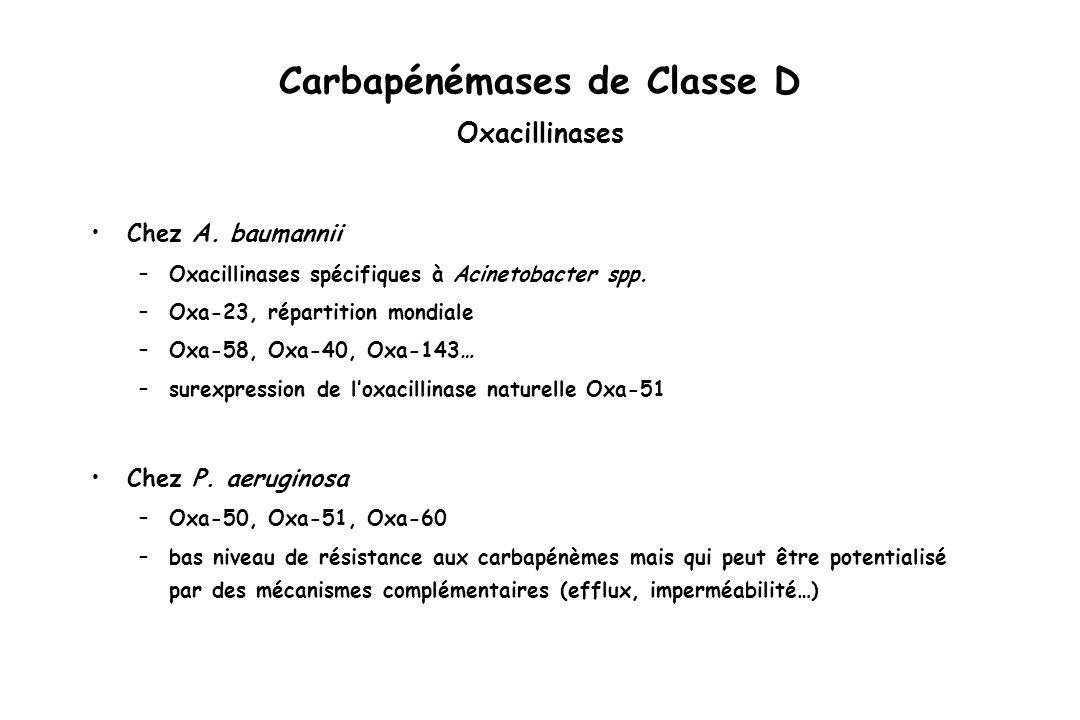 Carbapénémases de Classe D Oxacillinases