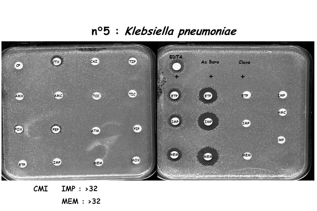 n°5 : Klebsiella pneumoniae