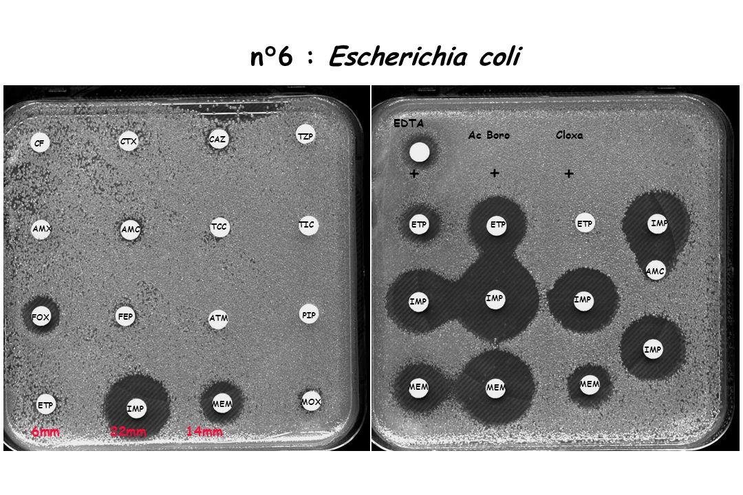 n°6 : Escherichia coli + 6mm 22mm 14mm EDTA Ac Boro Cloxa TZP CAZ CF