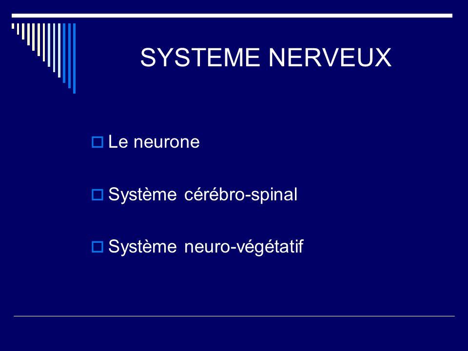 SYSTEME NERVEUX Le neurone Système cérébro-spinal