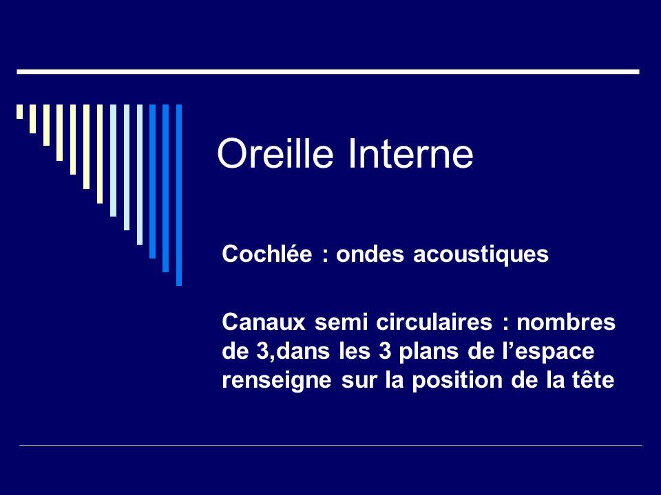 Oreille Interne Cochlée : ondes acoustiques