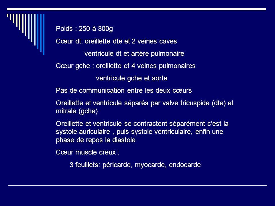 Poids : 250 à 300g Cœur dt: oreillette dte et 2 veines caves. ventricule dt et artère pulmonaire. Cœur gche : oreillette et 4 veines pulmonaires.
