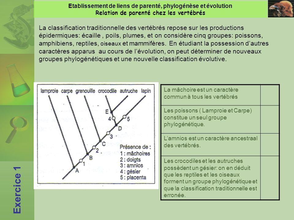 Etablissement de liens de parenté, phylogénèse et évolution