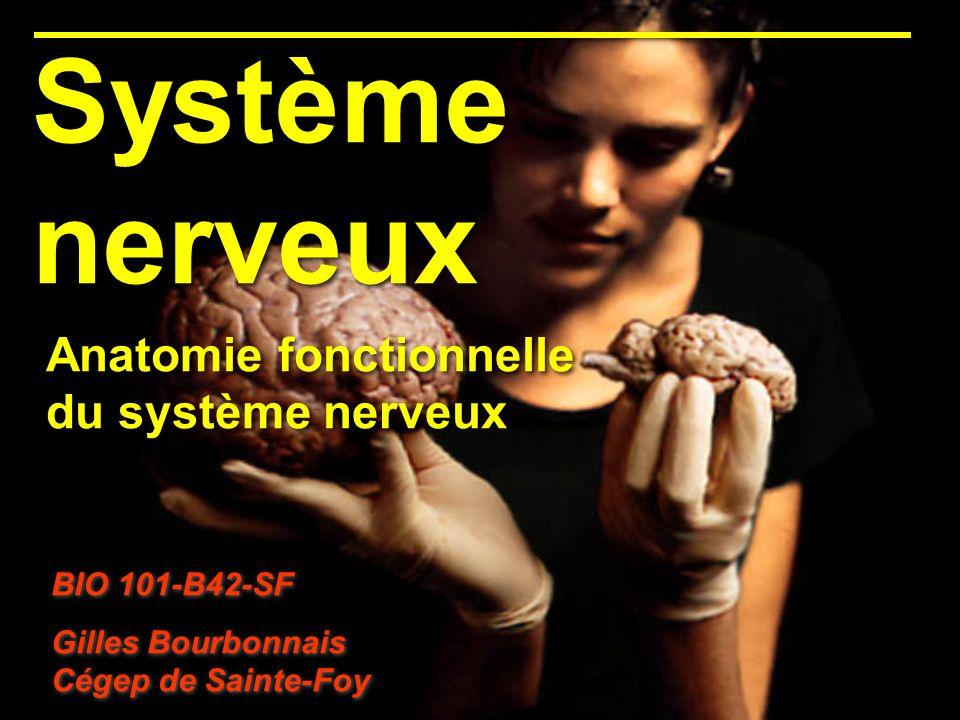 Système nerveux Anatomie fonctionnelle du système nerveux