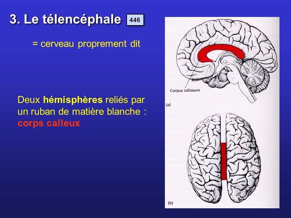 3. Le télencéphale = cerveau proprement dit
