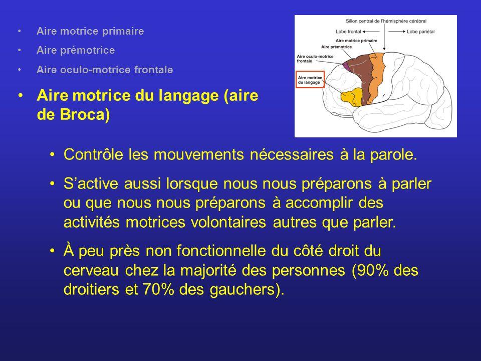 Aire motrice du langage (aire de Broca)