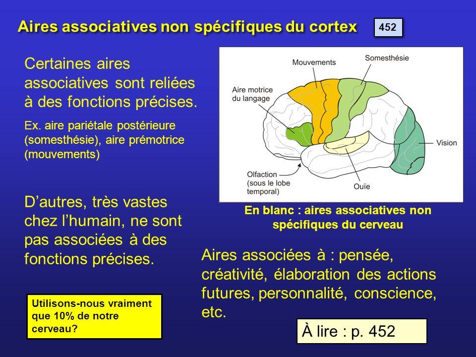 En blanc : aires associatives non spécifiques du cerveau