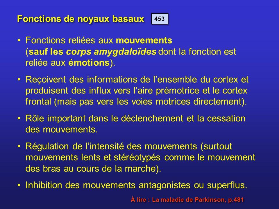 Fonctions de noyaux basaux
