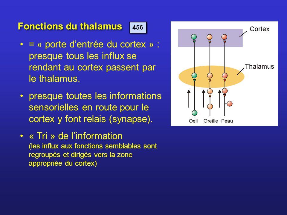 Fonctions du thalamus 456. = « porte d'entrée du cortex » : presque tous les influx se rendant au cortex passent par le thalamus.