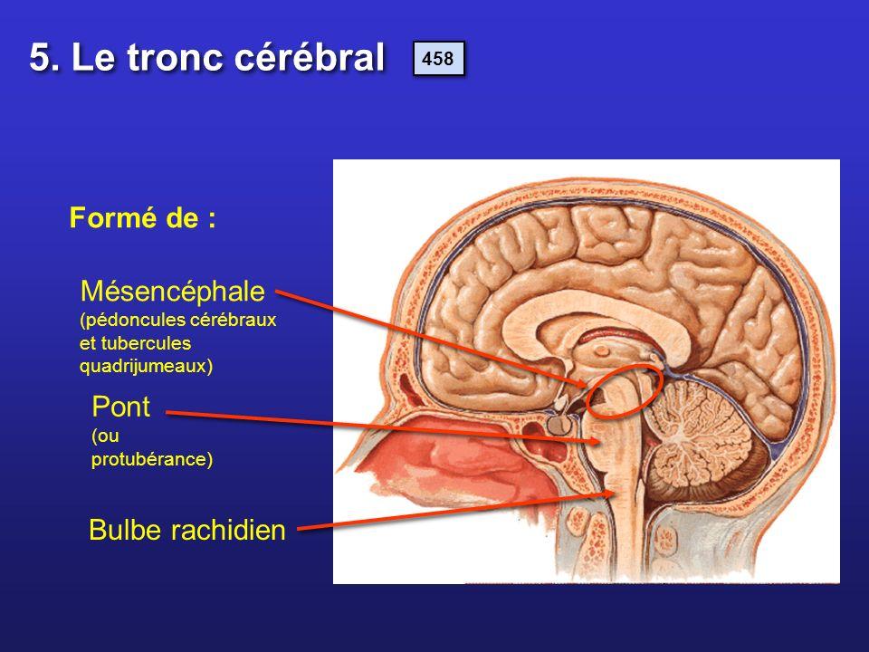 5. Le tronc cérébral Formé de :