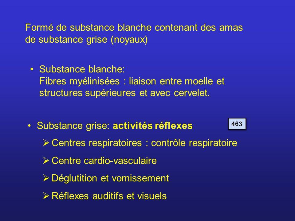 Substance grise: activités réflexes