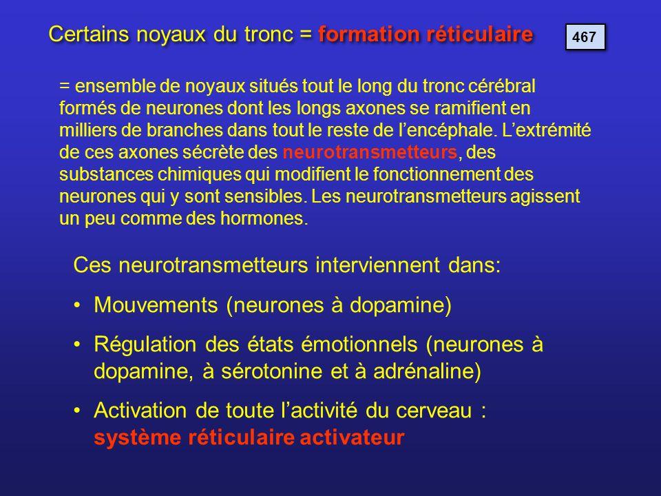 Certains noyaux du tronc = formation réticulaire