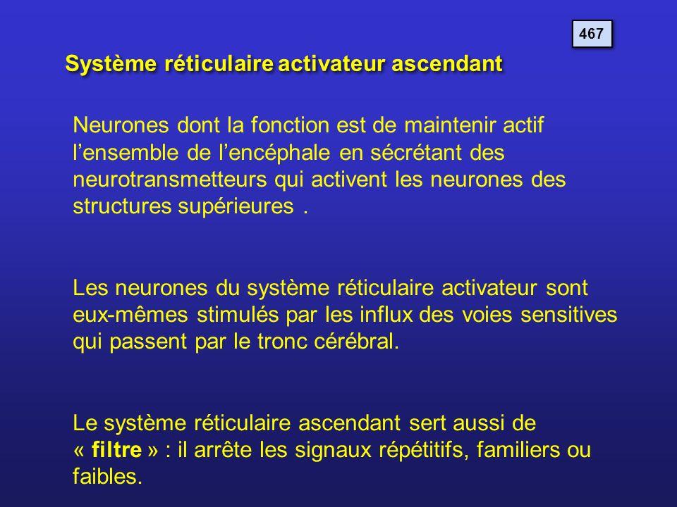 Système réticulaire activateur ascendant