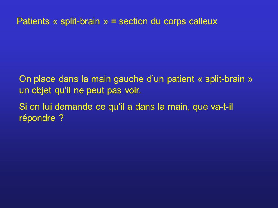 Patients « split-brain » = section du corps calleux