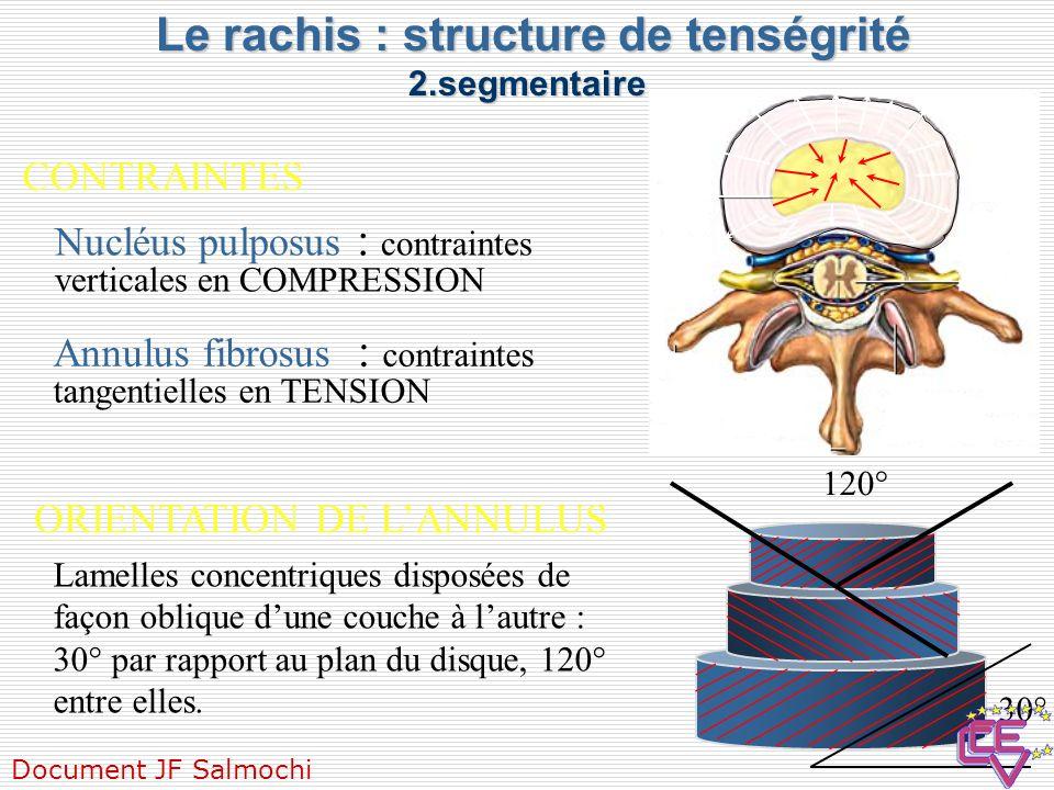 Le rachis : structure de tenségrité