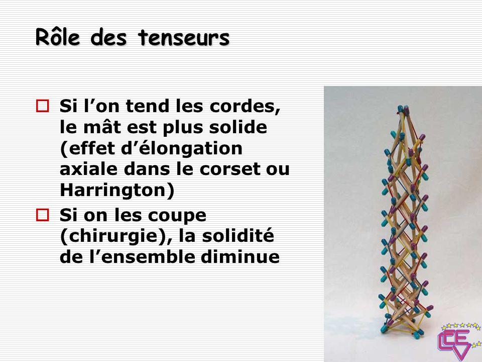 Rôle des tenseurs Si l'on tend les cordes, le mât est plus solide (effet d'élongation axiale dans le corset ou Harrington)