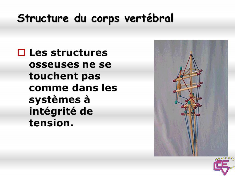 Structure du corps vertébral