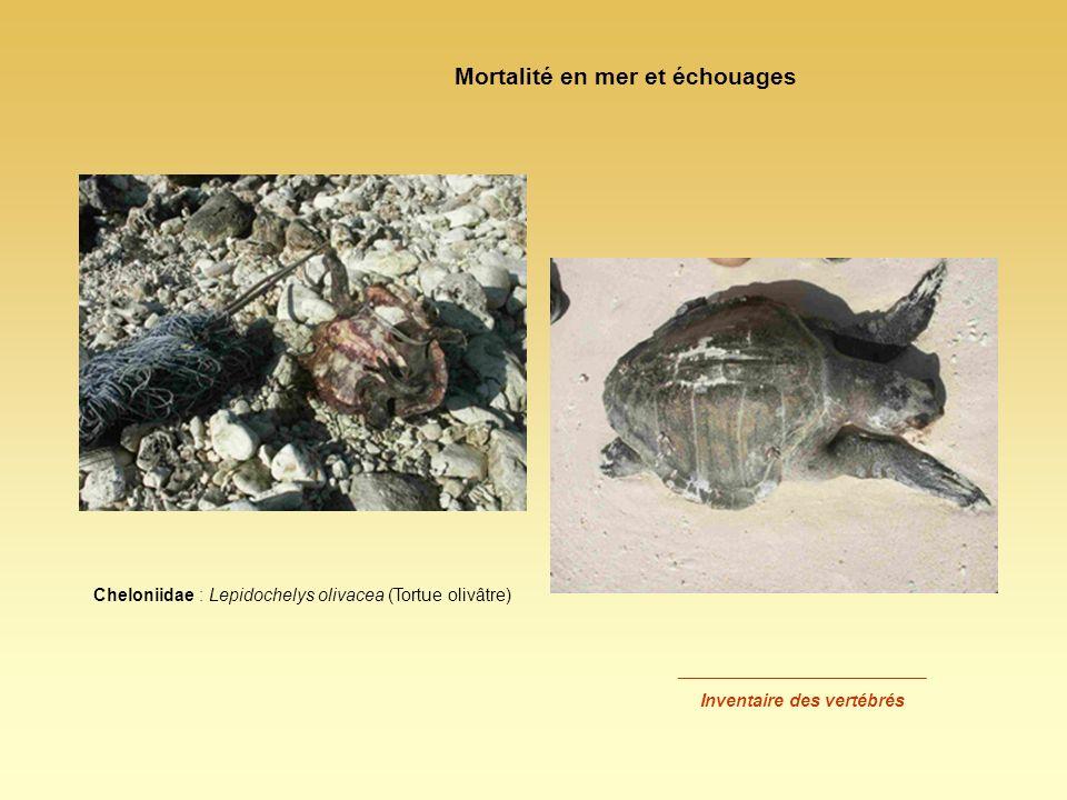 Mortalité en mer et échouages