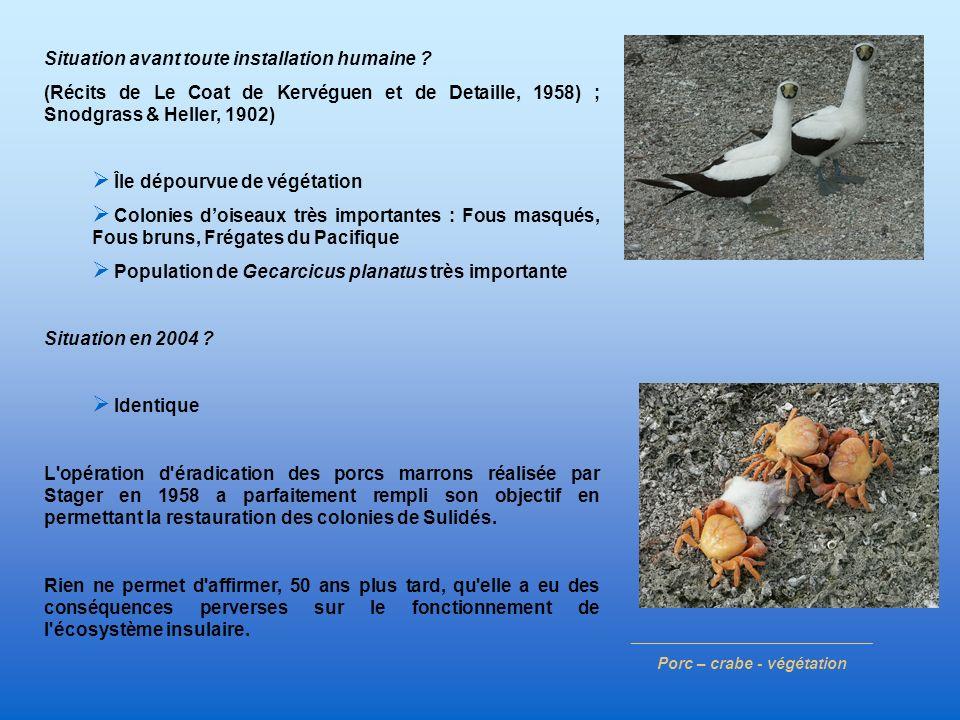 ___________________________ Porc – crabe - végétation