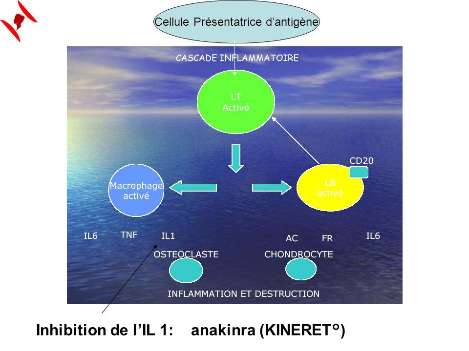 Cellule Présentatrice d'antigène