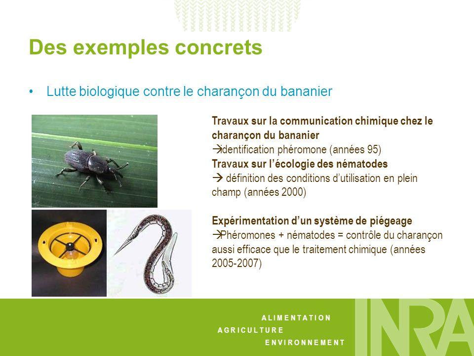 Des exemples concrets Lutte biologique contre le charançon du bananier