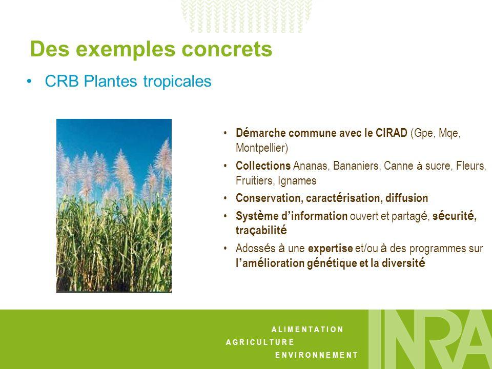 Des exemples concrets CRB Plantes tropicales