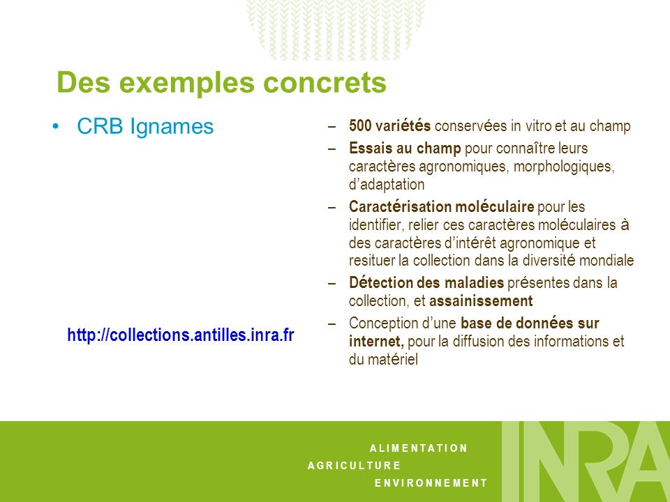 Des exemples concrets CRB Ignames http://collections.antilles.inra.fr